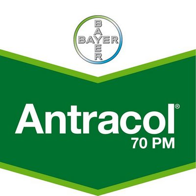 Antracol 70 PM - propineb 70 %