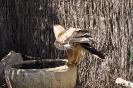 Animales Fauna Salvaje