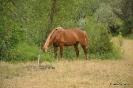 Caballos en el campo de Elche de la Sierra