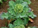 Brócoli_2