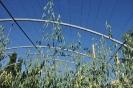 Cultivos Herbáceos