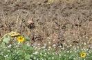 Girasol plantas previo cosecha