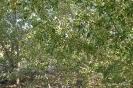 Montes árboles y plantas forestales