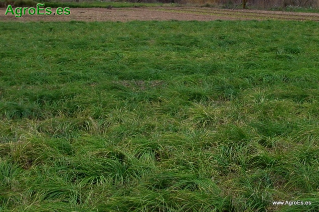 Suelos para cultivo de Azafrán - Criterios para elegir la parcela en función del suelo