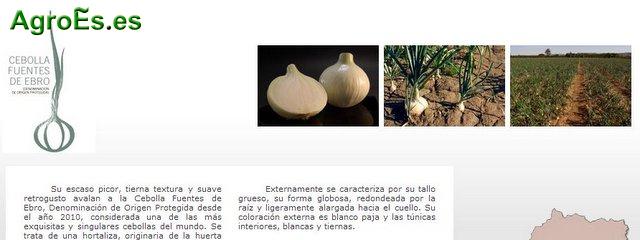 Cebolla Fuentes de Ebro con Denominación de Origen Protegida