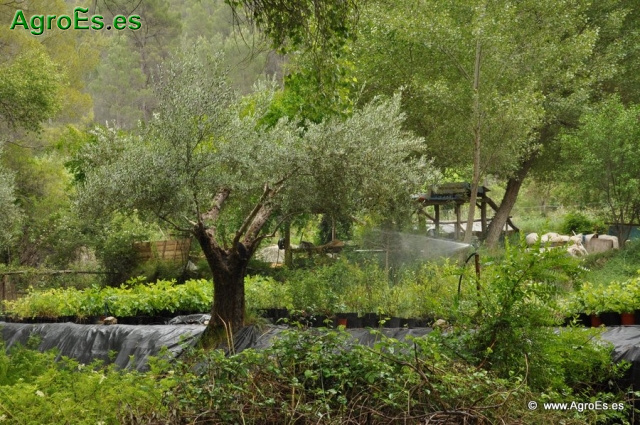 Efectos positivos y negativos medio ambientales de los regadíos en agricultura.