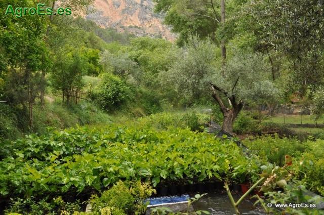 Necesidades nutricionales y Papel de los nutrientes en los cultivos hortícolas - Extracciones y Deficiencias