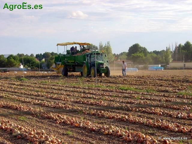 Abonado de Cebolla, extracciones y Dosis de Nutrientes para fertilización con Nitrógeno, Fósforo y Potasa