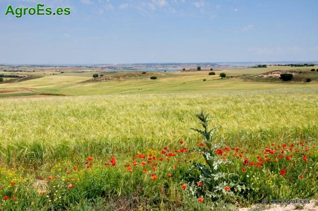 Agricultura Ecológica en Cereales de Secano