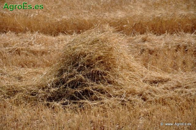 Costes económicos y Beneficios en Cereales de Secano de Agricultura Ecológica