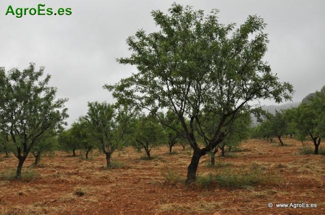 Necesidades o exigencias de clima y suelo de los frutales caducifoios o de de hoja caduca