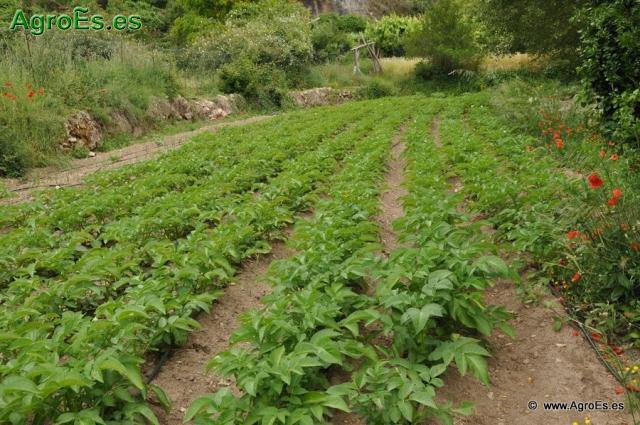 Abonado con Fósforo y Potasio en Cultivos Hortícolas - Cálculo de Dosis fertilización - Recomendaciones