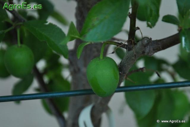 Abonado con Nitrógeno de los frutales caducifolios o de hoja caduca