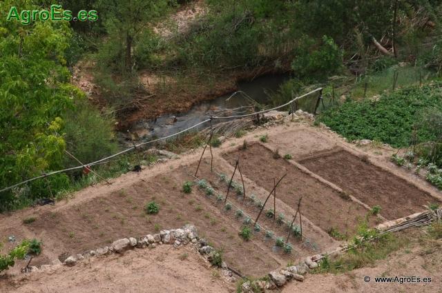 Dosis de Nutrientes para abonado recomendadas de Nitrógeno, Fósforo y Potasa en Cultivos Hortícolas