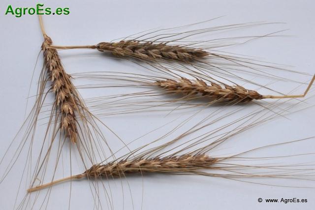 Fertilización Nitrogenada de cereales de invierno