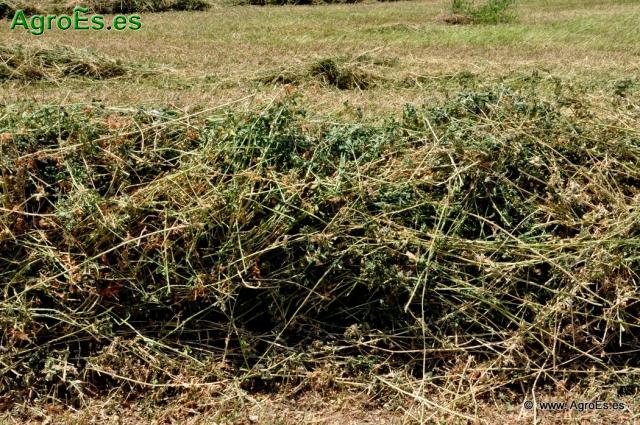 Terminología y definiciones de cultivos forrajeros, prado, pradera, monofitos anuales y plurianuales