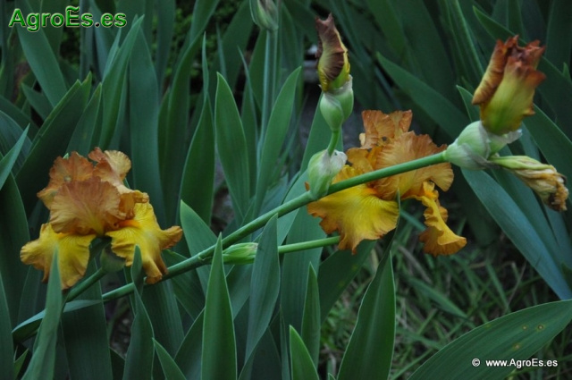 Plantas y rboles de jardiner a for Ver plantas ornamentales