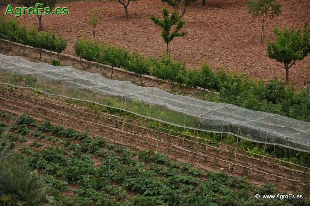Abonado con nitr geno en cultivos hort colas c lculo de for Horticultura definicion