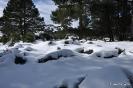 Senderismo con nieve_8