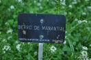 Berro de Manantial_1
