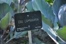 Col Lombarda_1