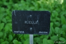 Rúcula Rúgula