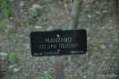 Manzano Golden Delicius_1