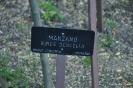 Manzano Verde Doncella_1