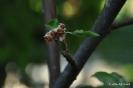 Manzano Verde Doncella_5