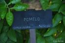 Pomelo_1