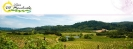 Vinos Manchuela