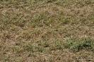 Alfalfa segada_5
