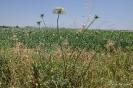 Malas hierbas sin nombres - Cómo se llaman