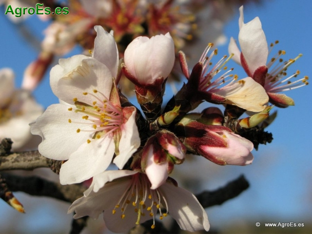 Pocas para aplicar el abono a frutales de hoja caduca y for Arboles frutales de hoja caduca