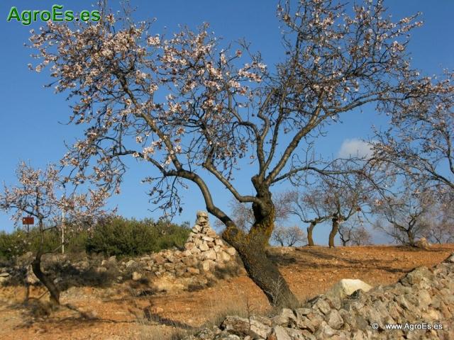 Necesidades totales de fertilizantes abonado de frutales for Arboles frutales de hoja caduca